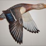 <b>AWARD OF EXCELLENCE</b><br>Denny Nurkiewicz <br><b>Off the Pond Too<br> -Mallard Hen </b> Wood carving/acrylic,  <br>15.5 x 22.25 x 3