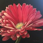 Denise Maughan  <b>Pink Gerbera Daisy </b> Oil,  20 x 20