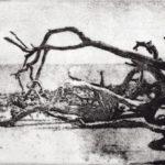 Thomas Norulak  <b>Driftwood Beach 1 </b> Etching,  8 x 10