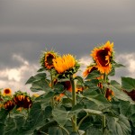 Suzanne Kapusta, 