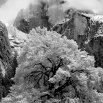 Robert S. Newell, 